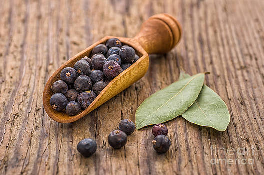 Spice scoop with juniper berries and bay leaves by Palatia Photo