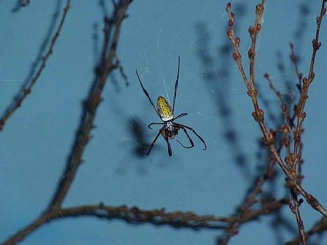 Adrienne Franklin - Spider