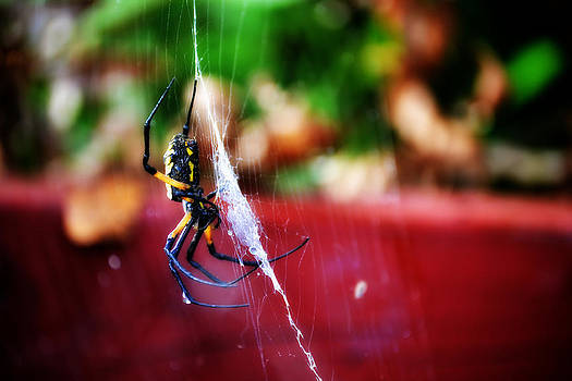 Spider and Web by Adam LeCroy