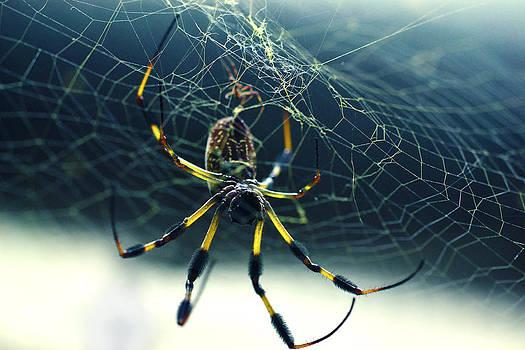 Matt Hanson - Spider Close Up