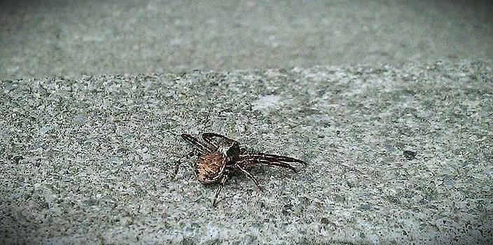 Spider by Courtnee Epps