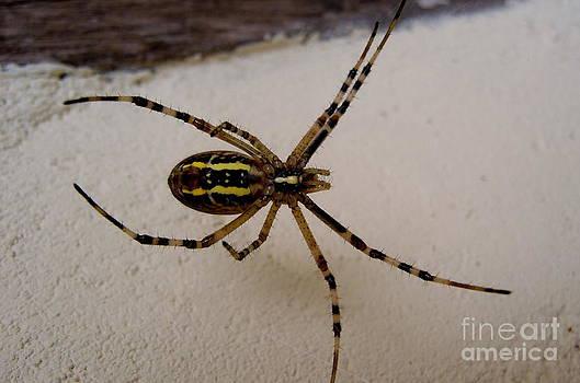 Spider by Frances Hodgkins