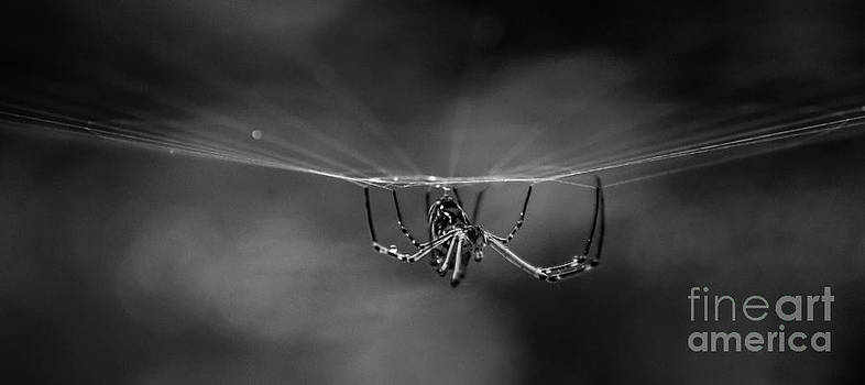 Spider In Rain by Tomislav Vucic