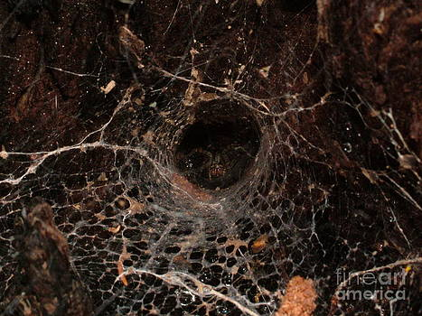 Spider in Spiderweb by Mike Cartwright