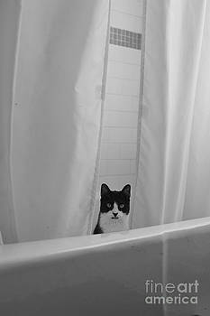 Spider in the tub by Tina Osterhoudt
