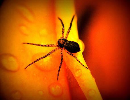 Spider in yellow by Slawek Sepko