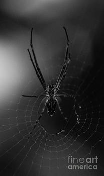 Spider by Tomislav Vucic