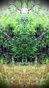Spider Web 1 by Karen Newell