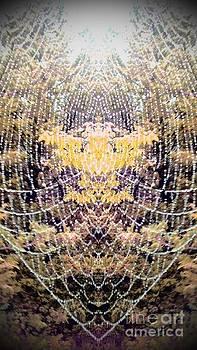 Spider Web 2 by Karen Newell