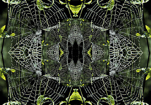 Spider Web by Richard Newman