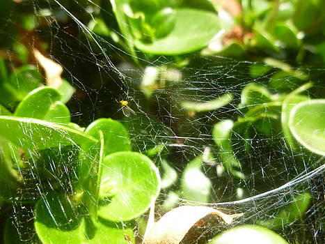 Spider's Web 1 by Montana Wilson