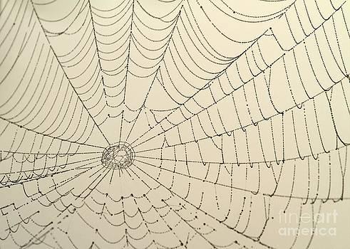 Sabrina L Ryan - Spiderweb at Dawn