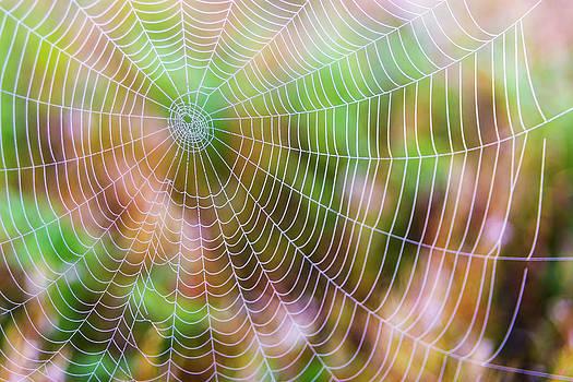 Spiderweb by Nebojsa Novakovic