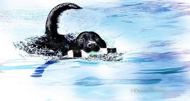 Splash by DM Werner