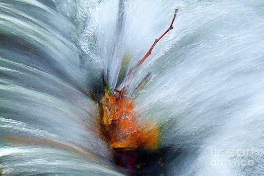Splash O Color by Thomas Bomstad
