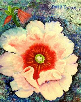 Splashes of White on a Hollyhock Flower by Janis  Tafoya