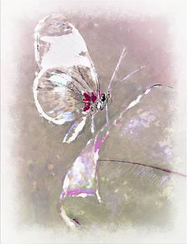 Splatter by Jill Balsam