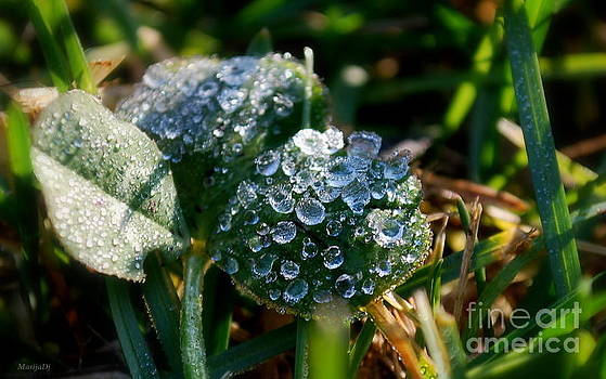 Splendor in the grass by Marija Djedovic