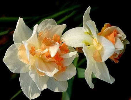 Rosanne Jordan - Splendor of Spring