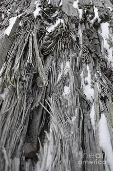 Randy J Heath - Splintered Wood