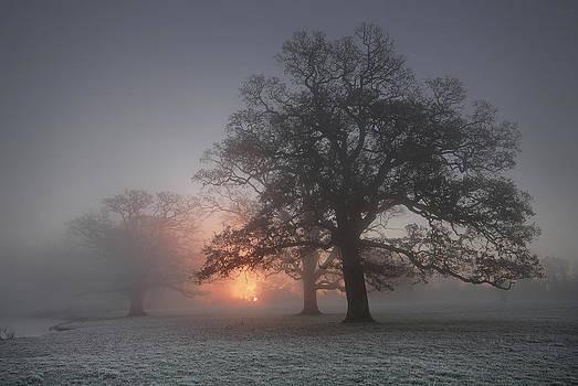 Spooky Misty Morning  by John Chivers