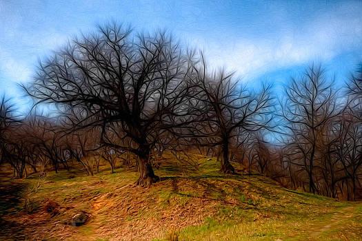 Matt Create - Spooky Trees