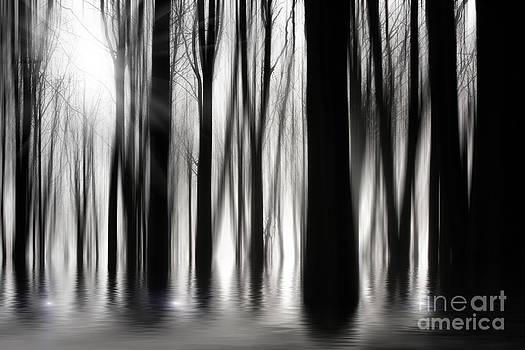Simon Bratt Photography LRPS - Spooky woods