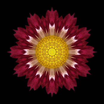 Spoon Chrysanthemum I Flower Mandala by David J Bookbinder