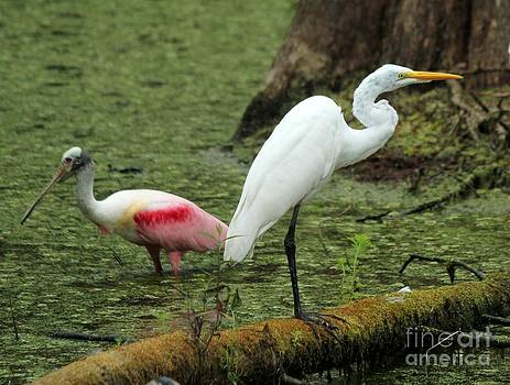 Spoonbill and Egret by Theresa Willingham