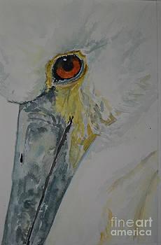 Spoonbill by Betty Mulligan