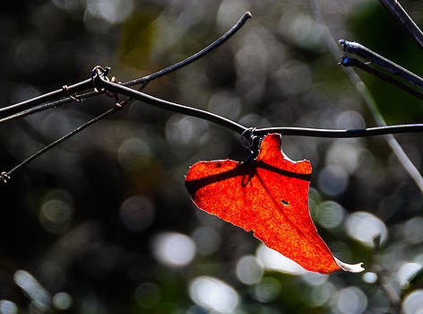 Spot of Red by Don L Williams