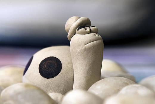 Steven Poulton - Spot the Turtle