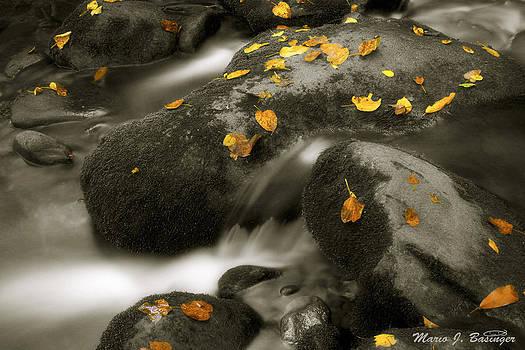 Spots of fall by Mario Basinger