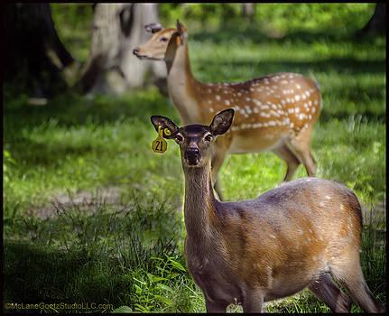 LeeAnn McLaneGoetz McLaneGoetzStudioLLCcom - Spotted Deer