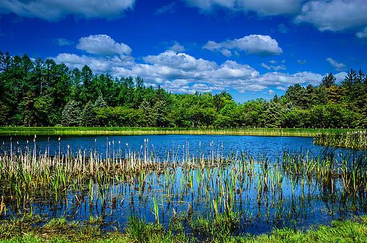 Sprague Brook Park Pond by Anthony Morganti