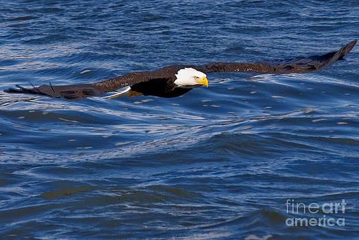 Spread Eagle by Michael Rucci