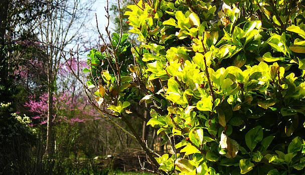 Spring ahead by Anita Reynolds