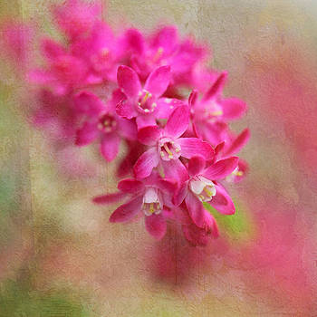 Spring Beauty by Annie Snel