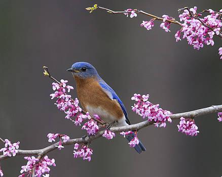 Spring Beauty by Jim E Johnson