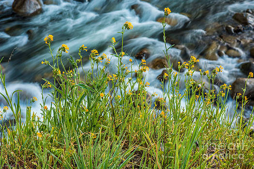 Spring Blooms by Daniel Ryan