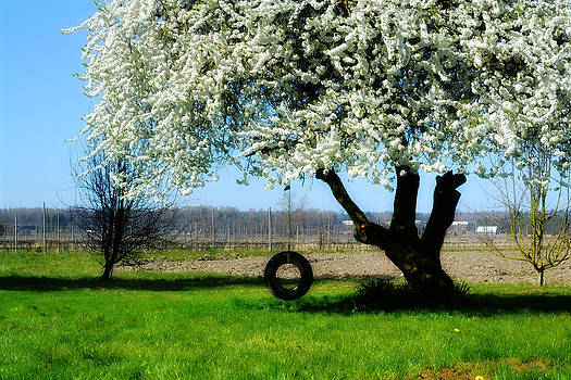 Spring Blossom by Christine Carter