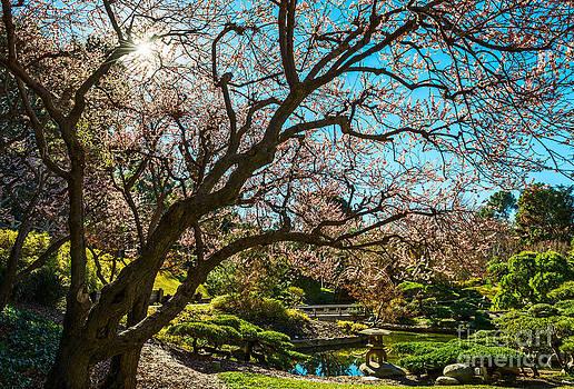 Jamie Pham - Spring Blossom Star