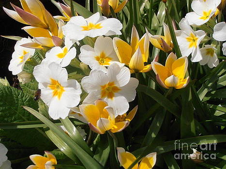 Spring Bouquet by Elaine Jones