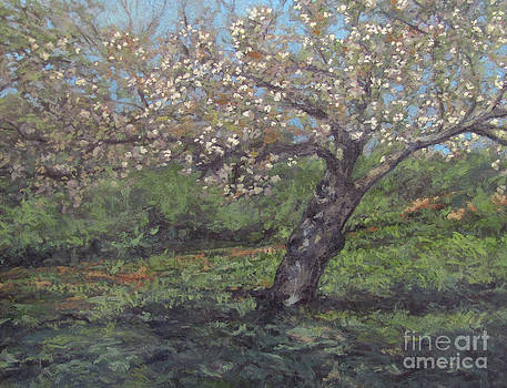 Spring Cherry Blossoms by Gregory Arnett