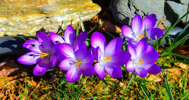 Spring Colour  by Randy Giesbrecht