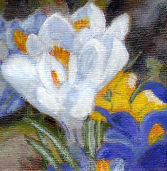 Spring Crocus by Jennifer Frampton