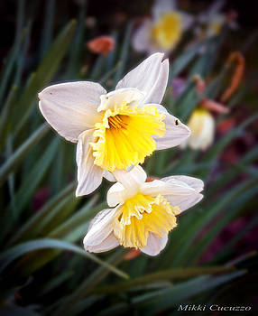 Spring Daffodils by Mikki Cucuzzo