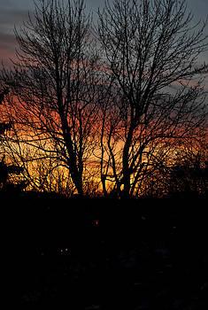Spring Dawn by Frederico Borges