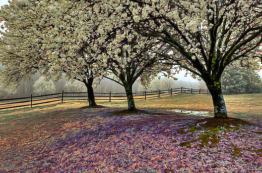 Spring by Donnie Bagwell