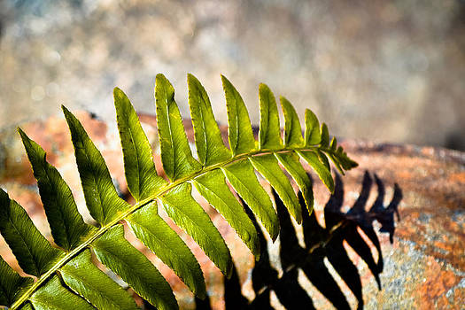 Spring Fern on the Rocks by Mary Zeman